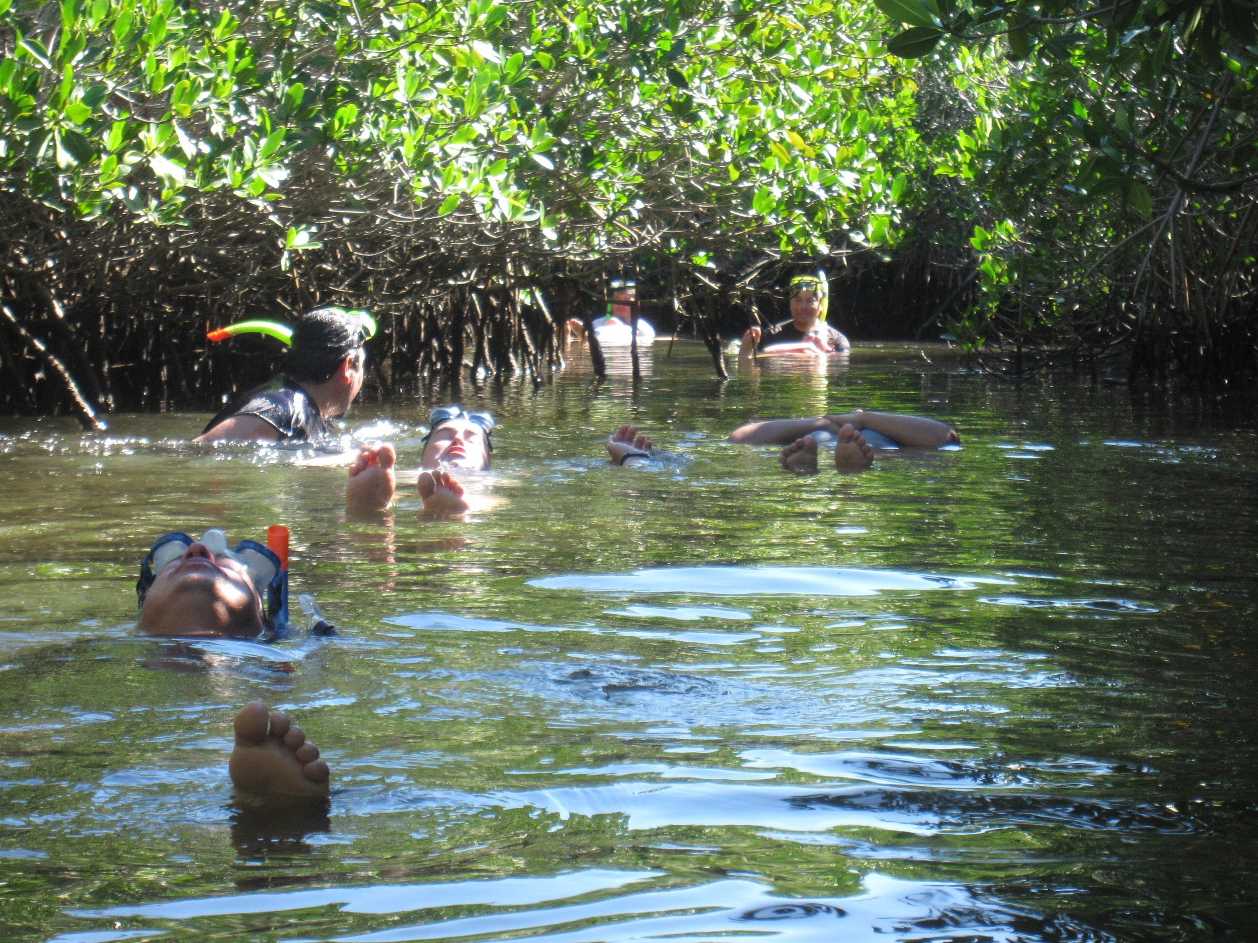 Mangrove Float.JPG