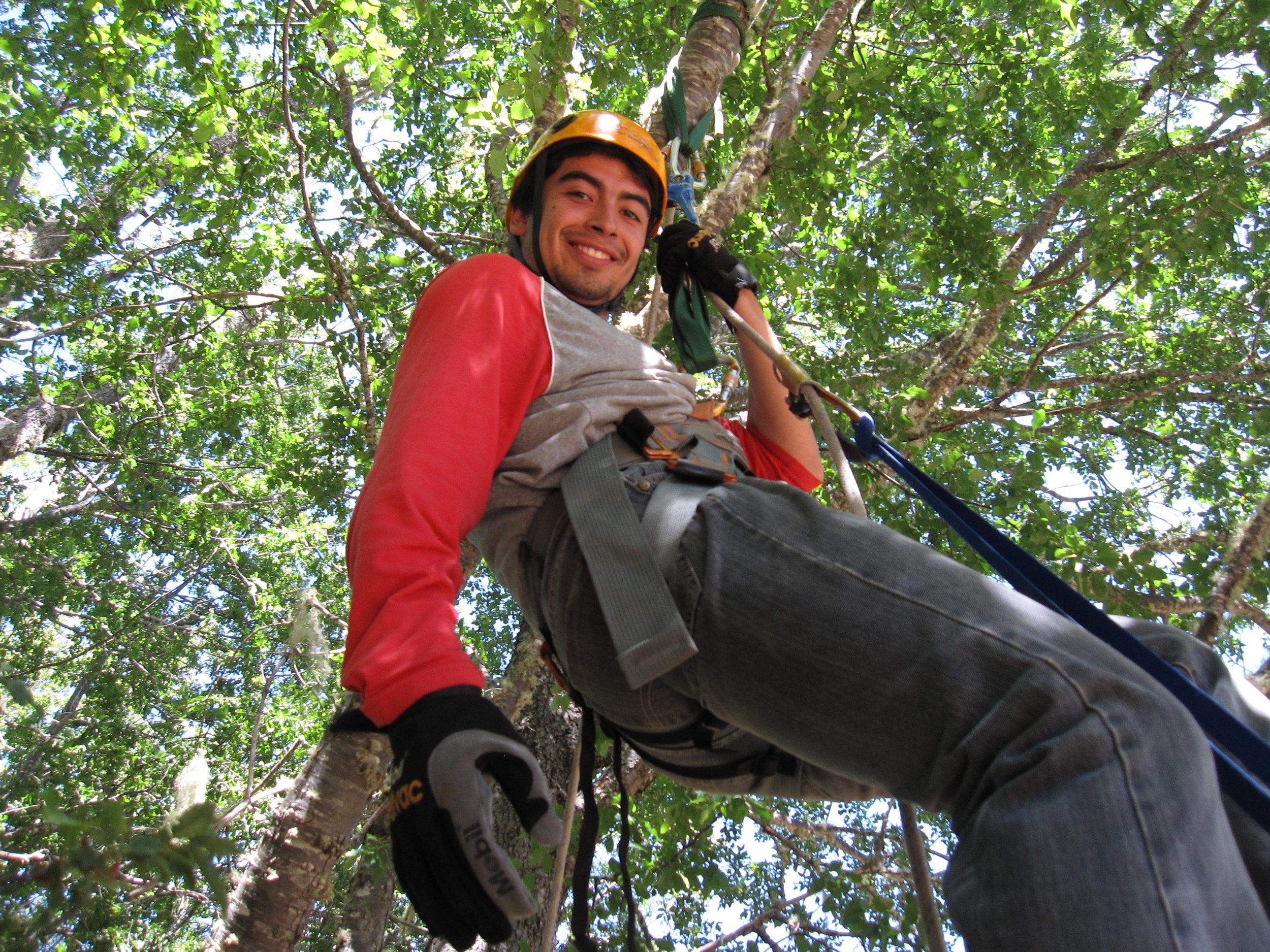 Jumar a Tree