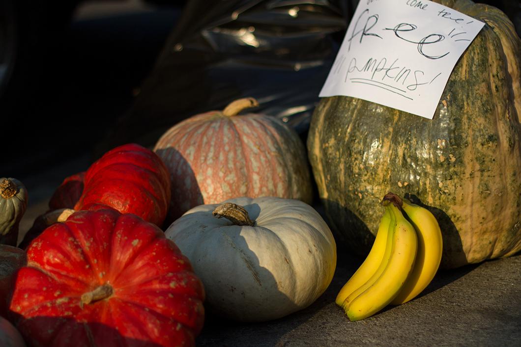 still life #7 - free pumpkins