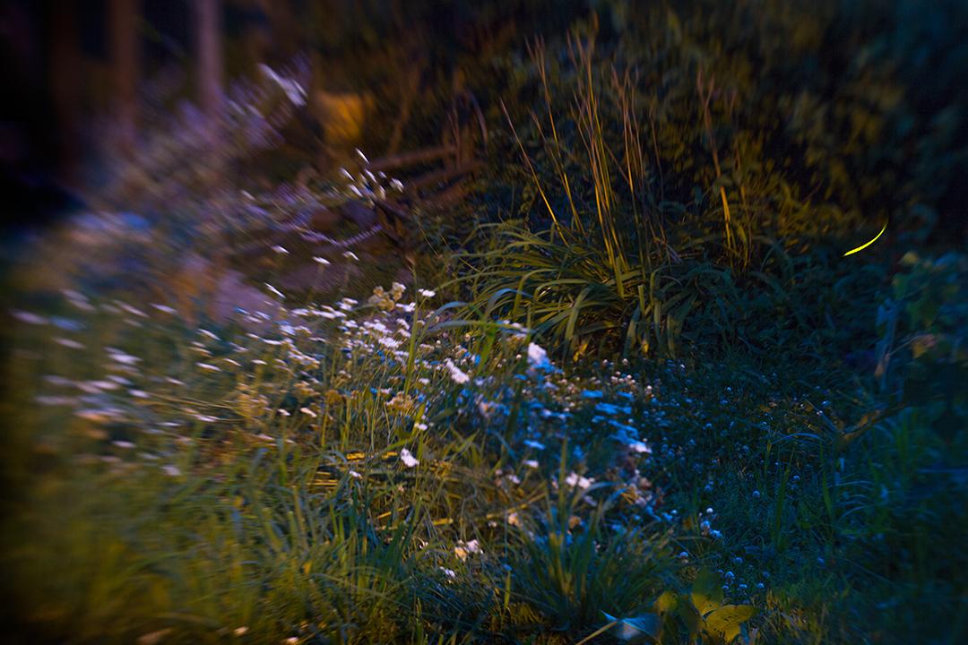 Giorgi-Melina_backyard-fireflies.jpg