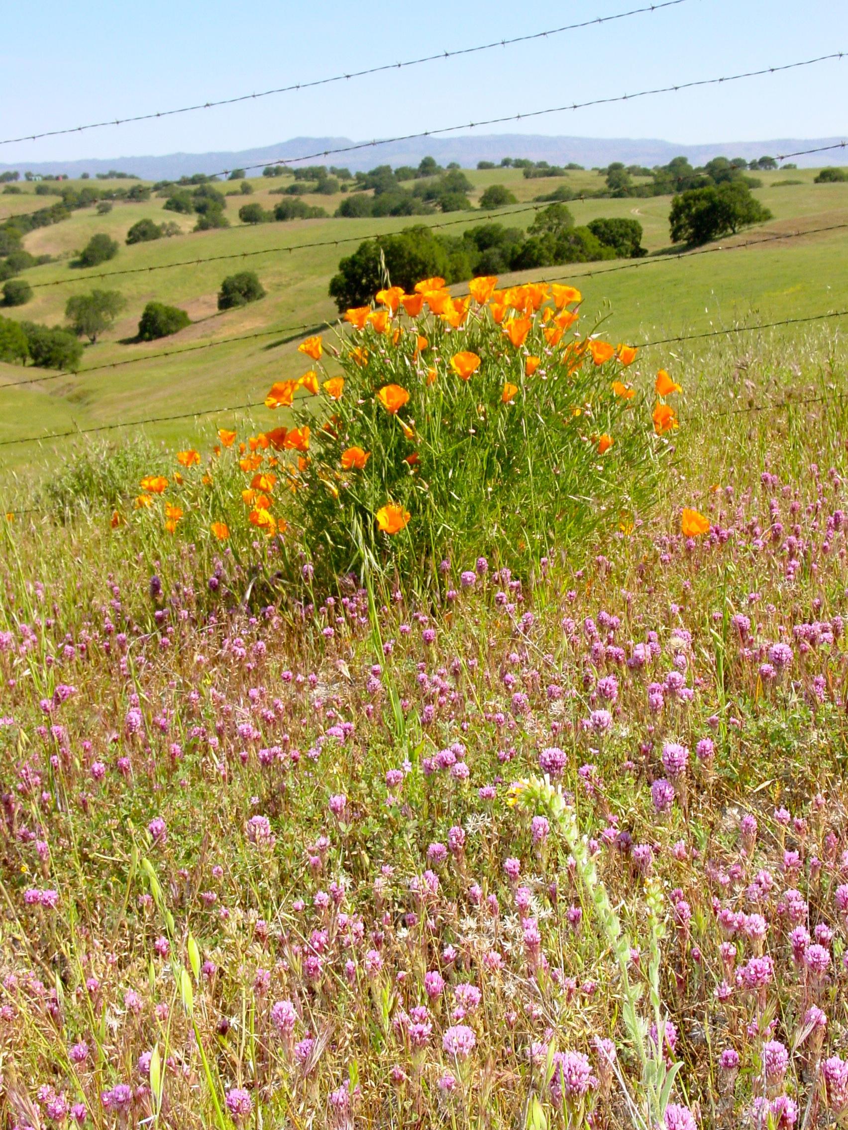 wildflowers01.jpg