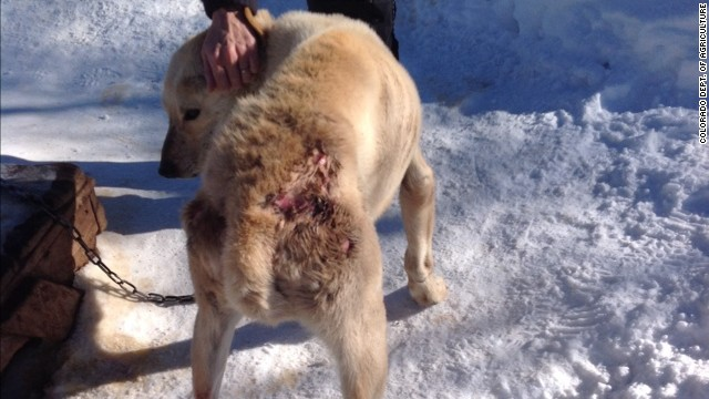 140113221105-01-dog-sled-cruelty-story-top.jpg
