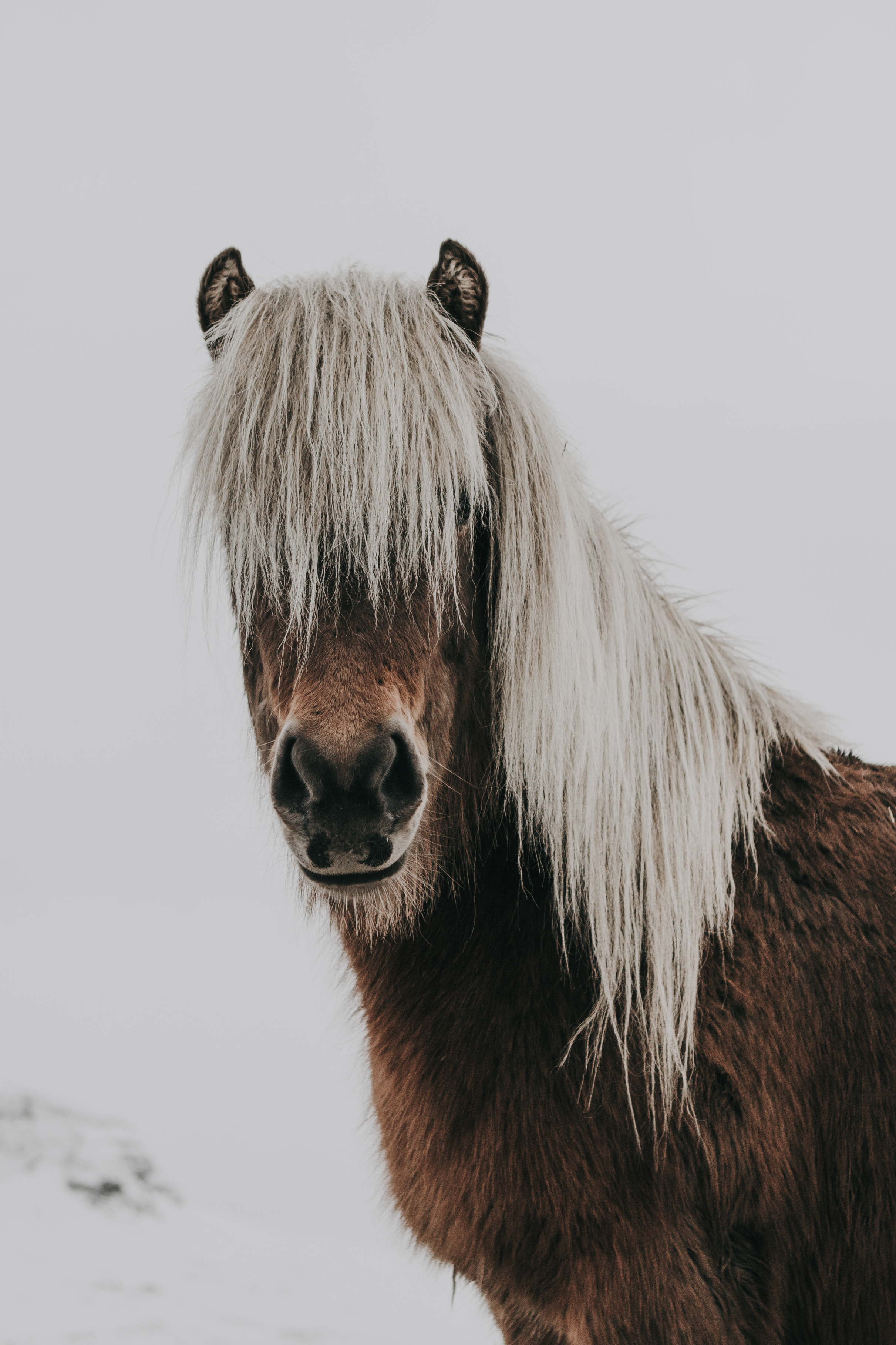 lydia-harper- horse with white brow Up cL.jpg