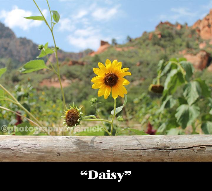 Daisy copy.jpg