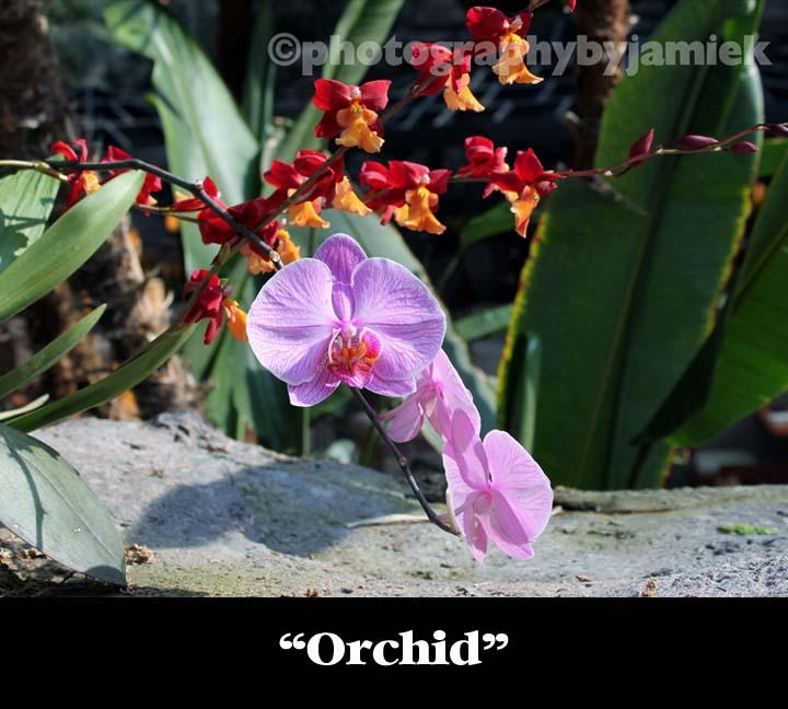 Orchid copy.jpg
