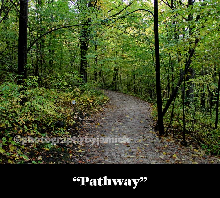 pathway copy.jpg