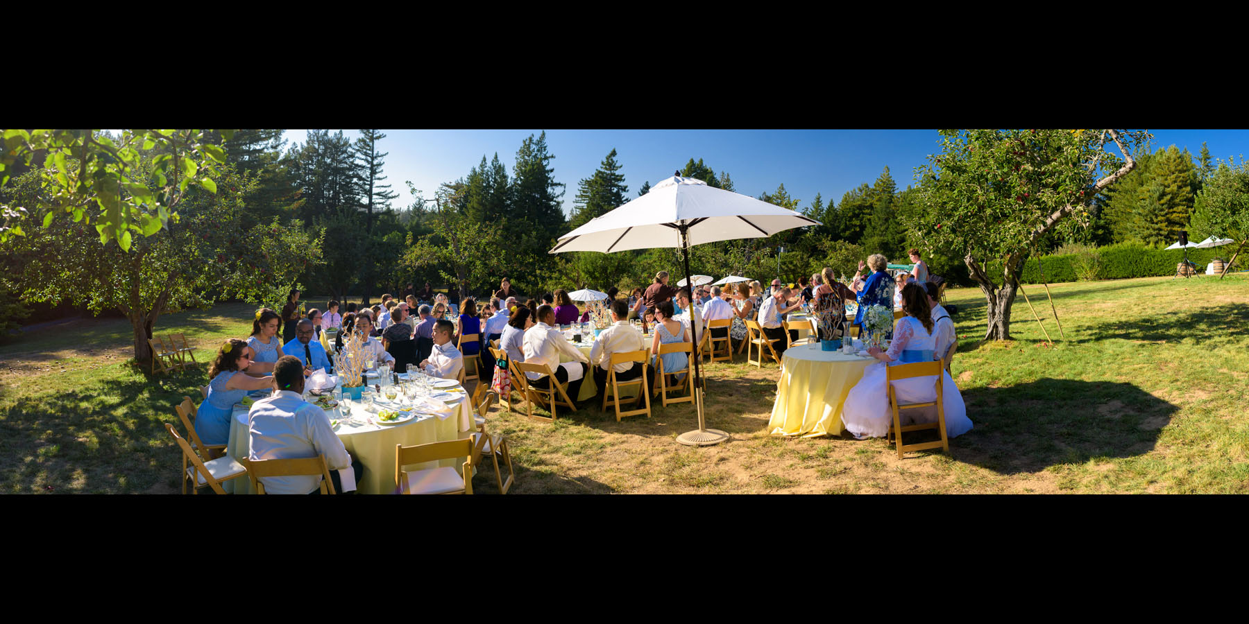Panoramic photo of the reception in the apple orchard - Private Estate wedding in Sebastopol, CA - by Bay Area wedding photographer Chris Schmauch
