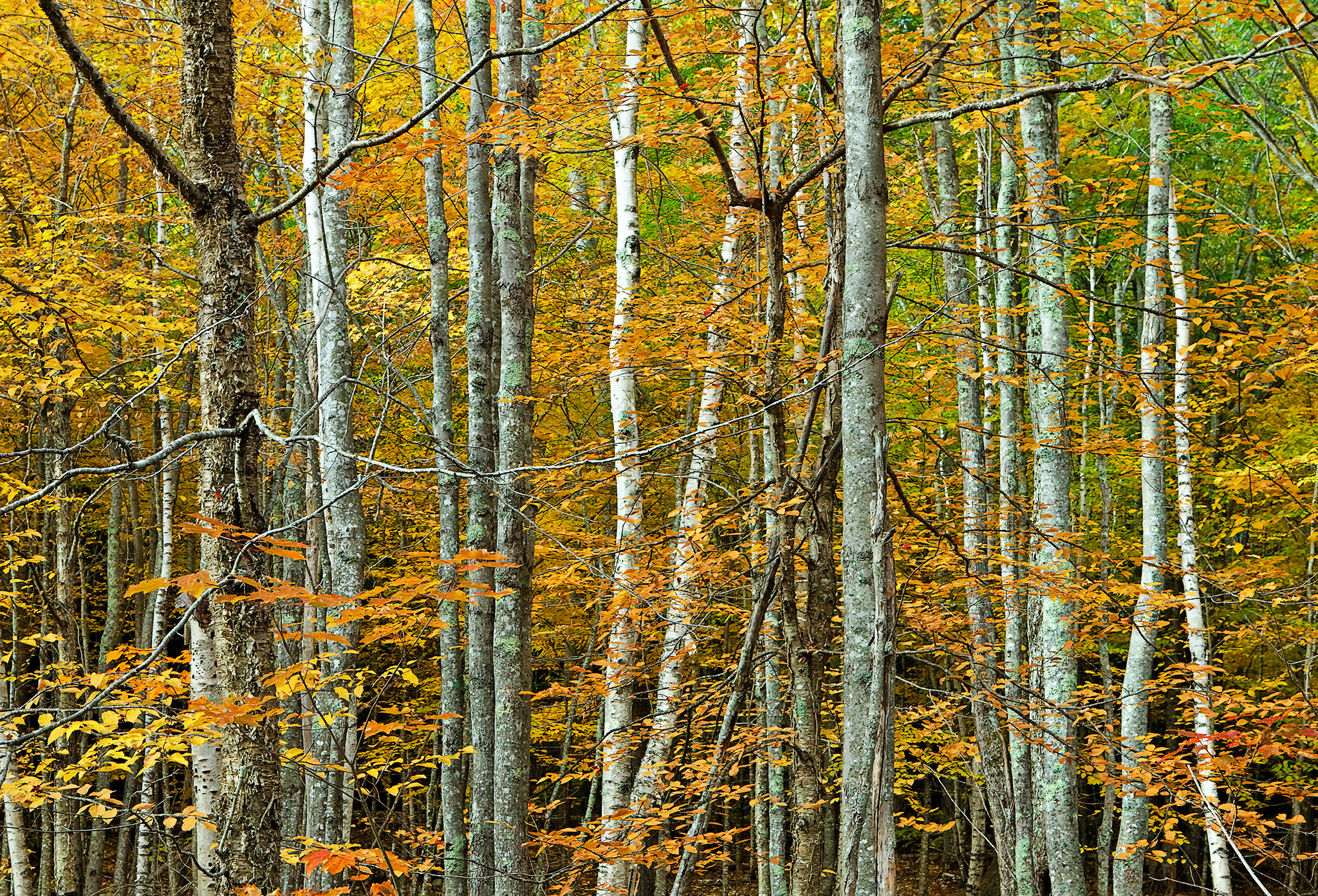 Sieur de Monts Woods