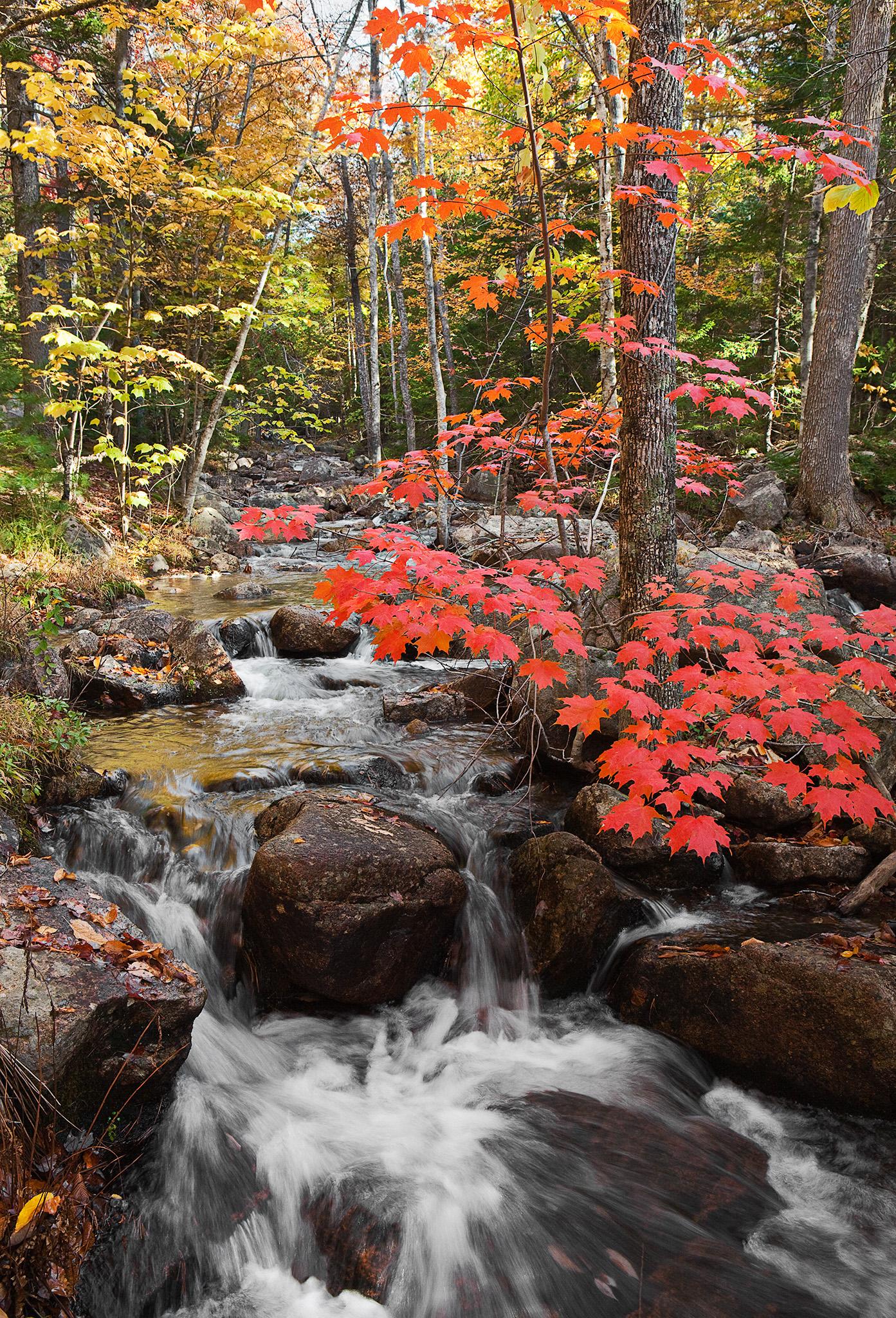 Jordan Pond Stream