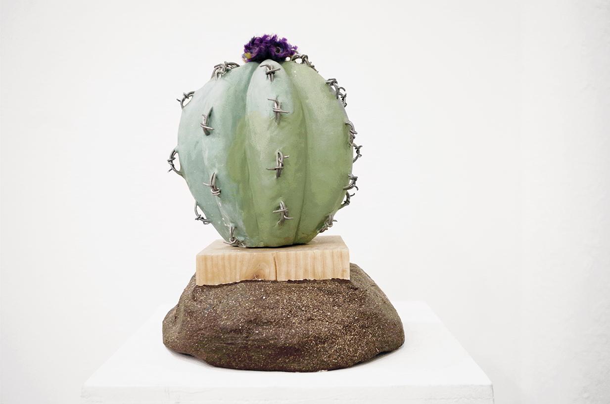 cacti_round.jpg