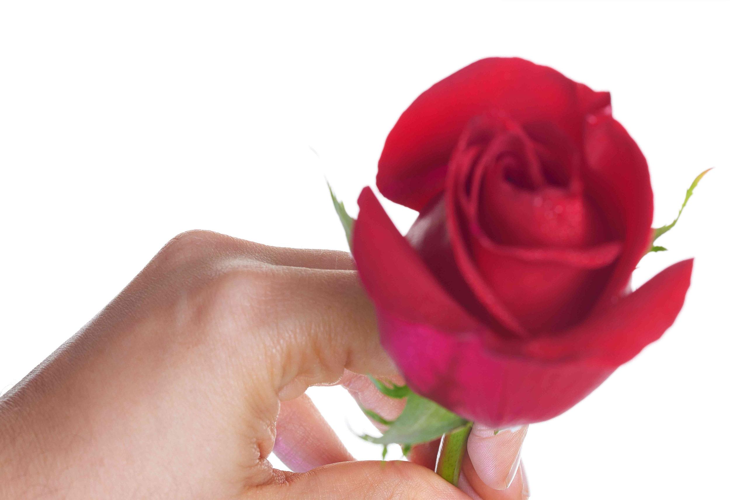 beautifulrose1 copy.jpg