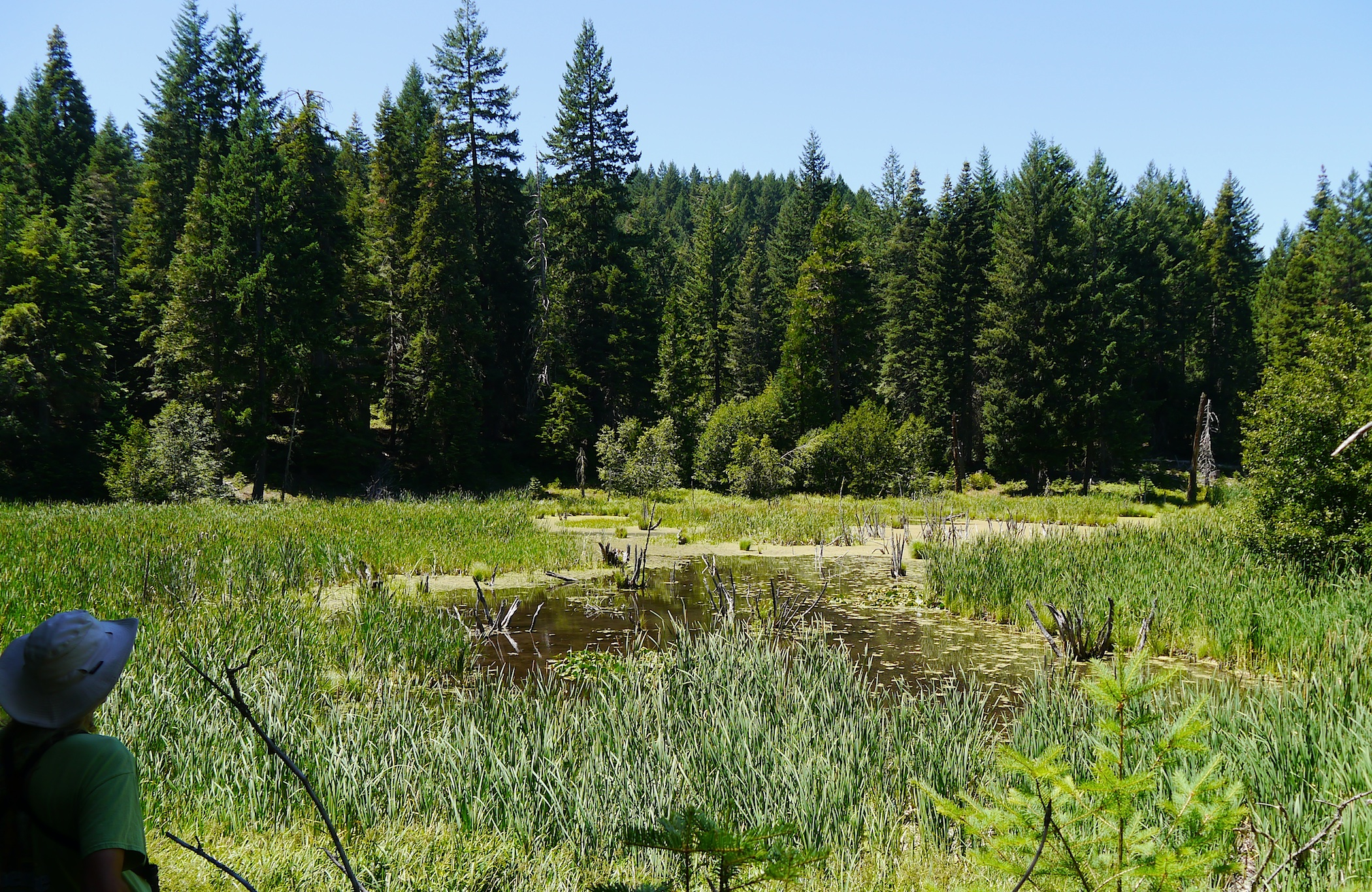 We viewed a parsnip lake from afar. Dr. parker didn't want us to contaminate the lake, where the spotted frog breeds. tpdickey photo.