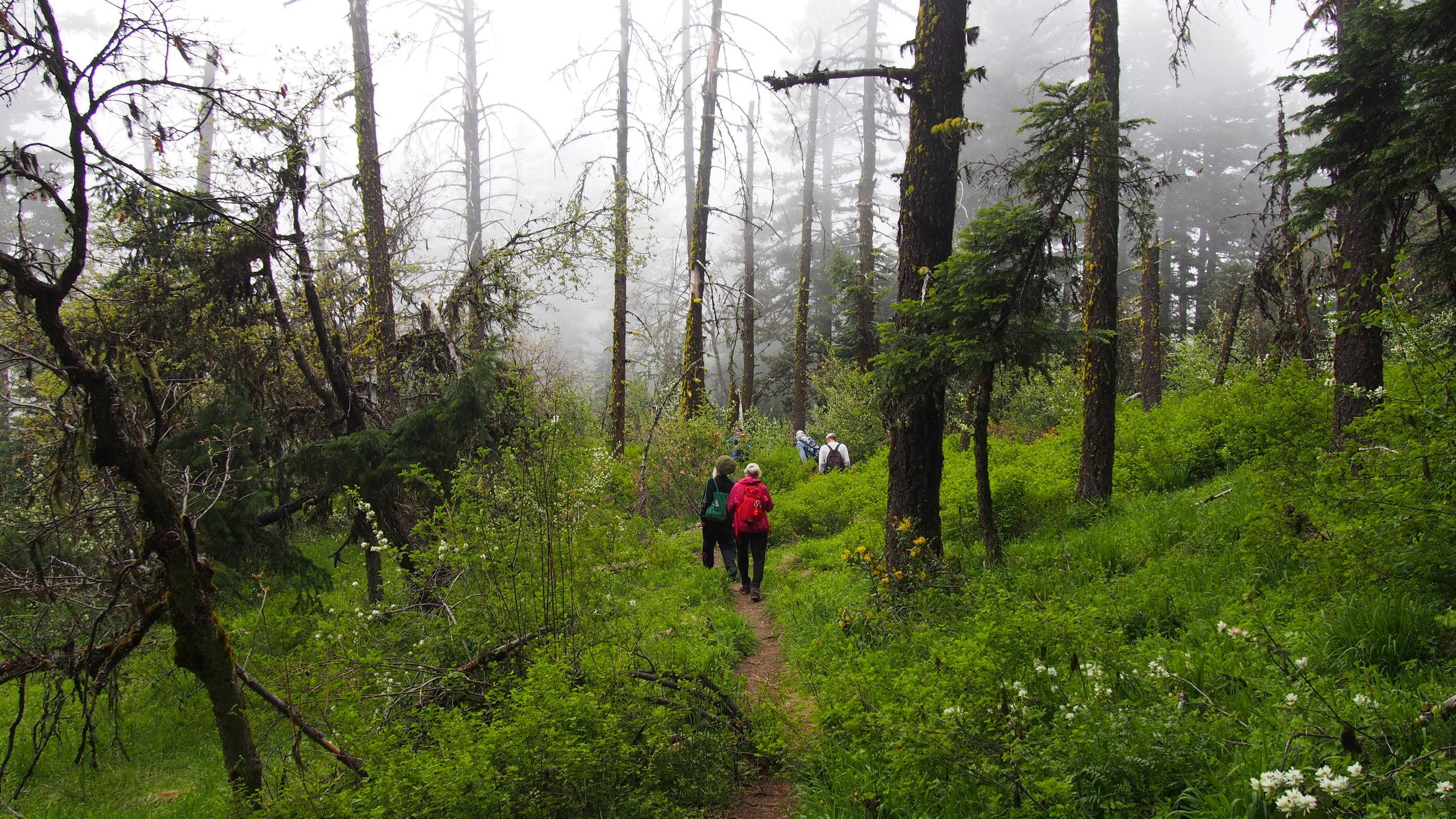 Hiking the Greensprings Mountain loop.