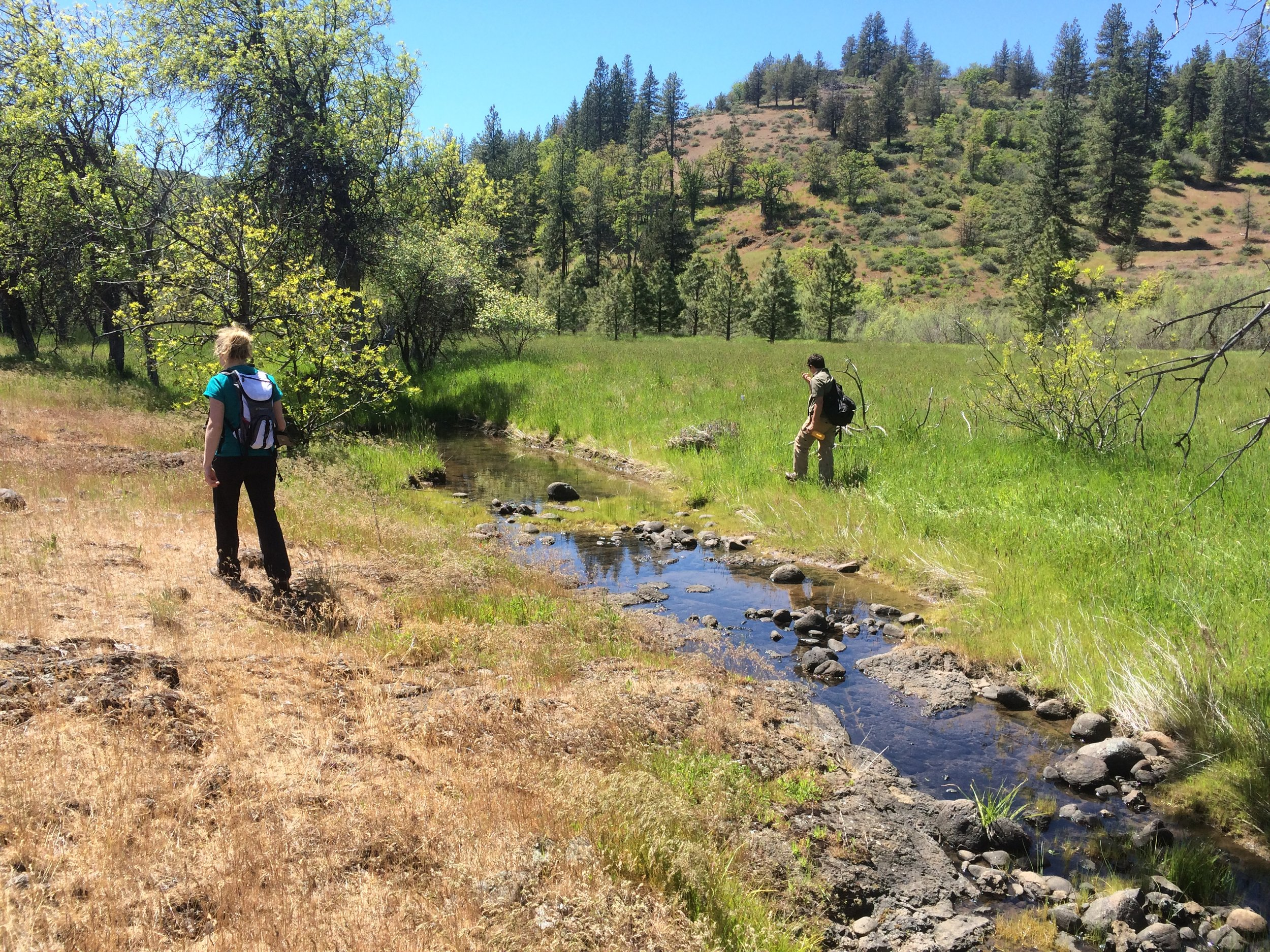 Surveying both sides of Lower Jenny Creek. Photo by Wanda Chin