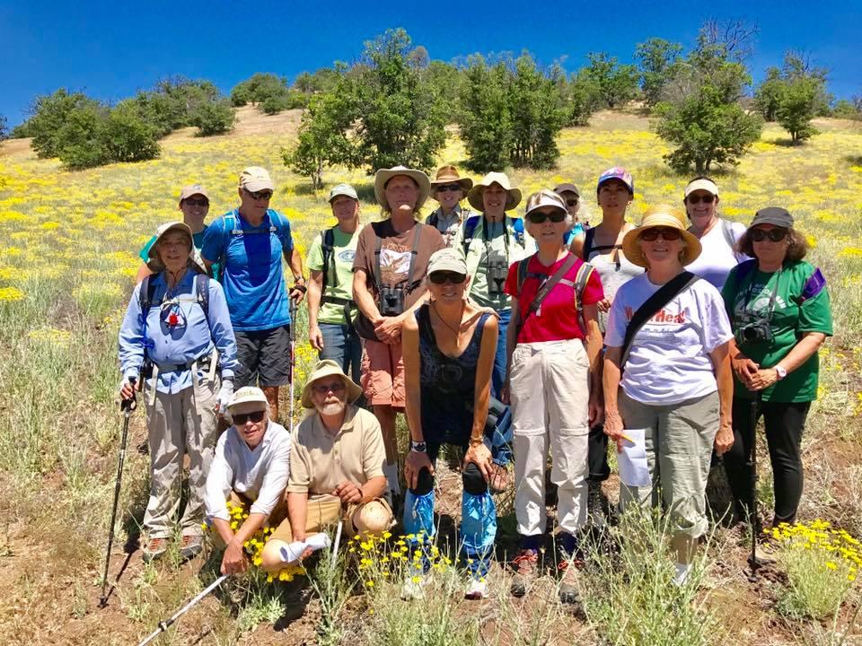 Our group stands among the California sunshine ( Eriophyllum lanatum )