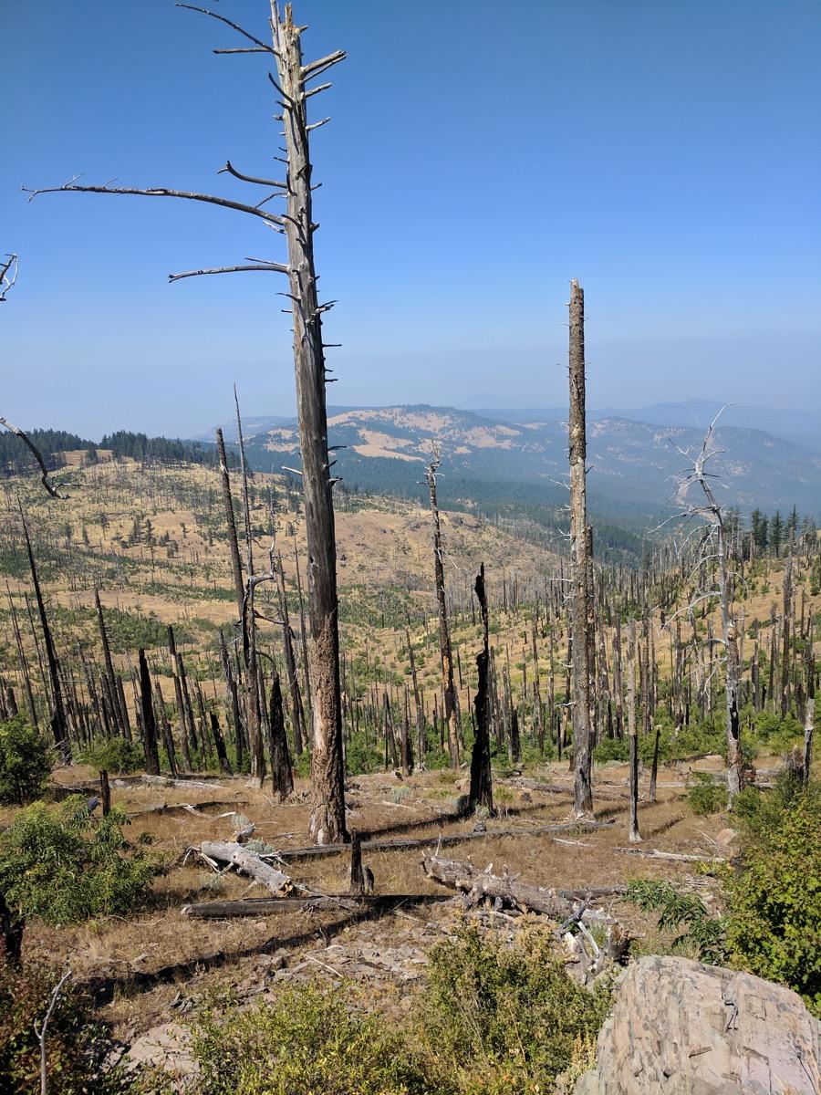 Tree snags among the smoky haze