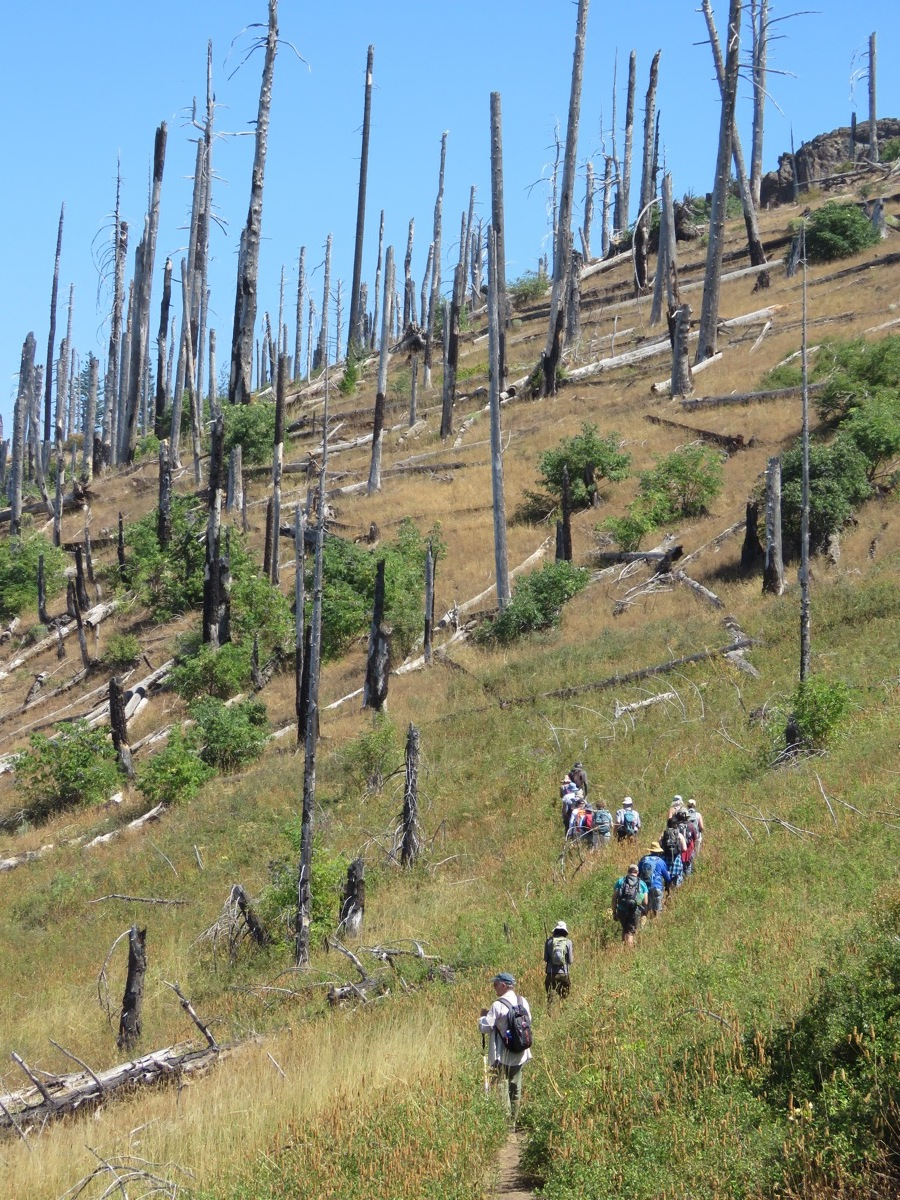 Hiking through fire touched landscape, 15 years later. C Beekman photo