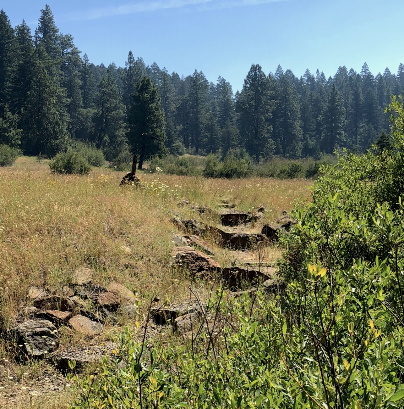 The Pacific Crest Trail from Greensprings to Hyatt