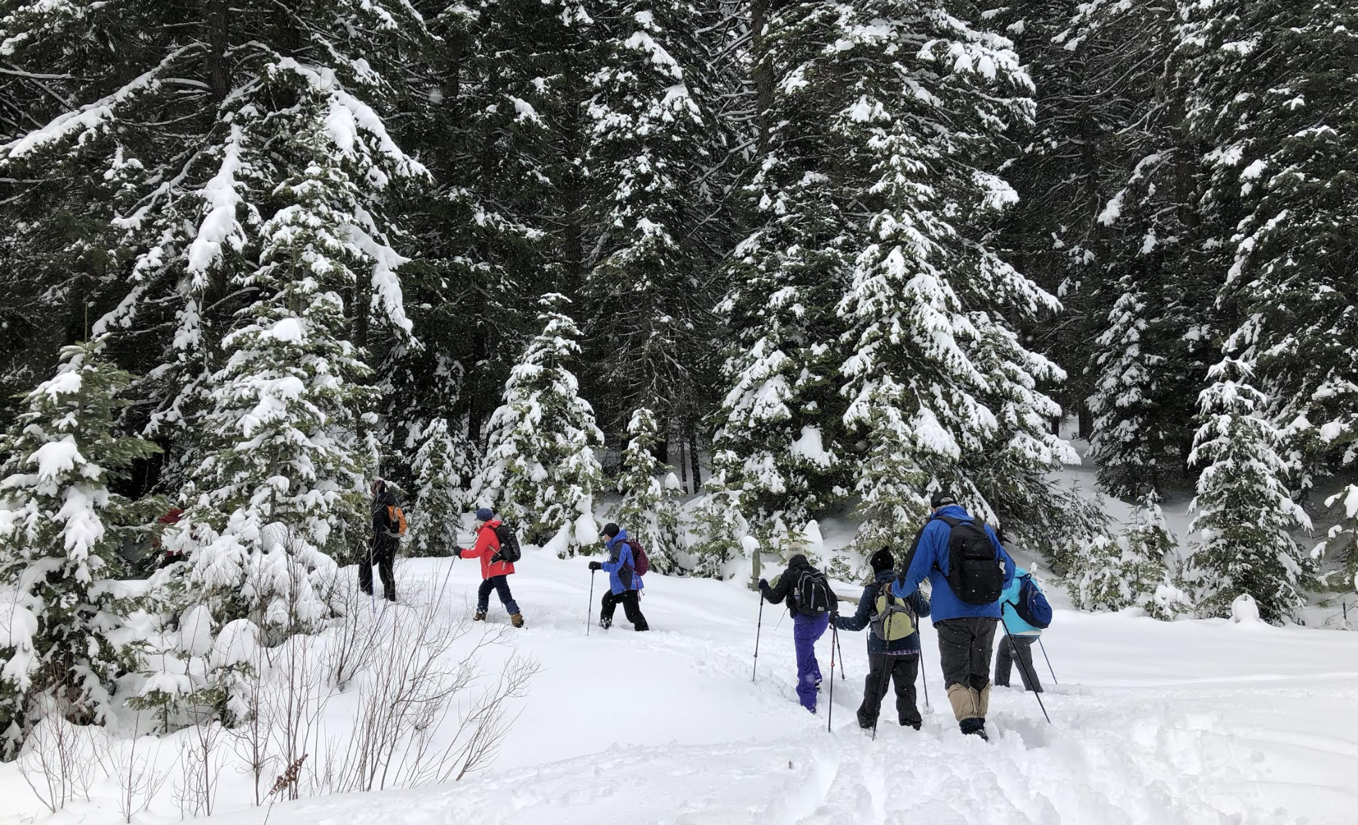 Hikers fan out along trail to find signs of wildlife in the snow.