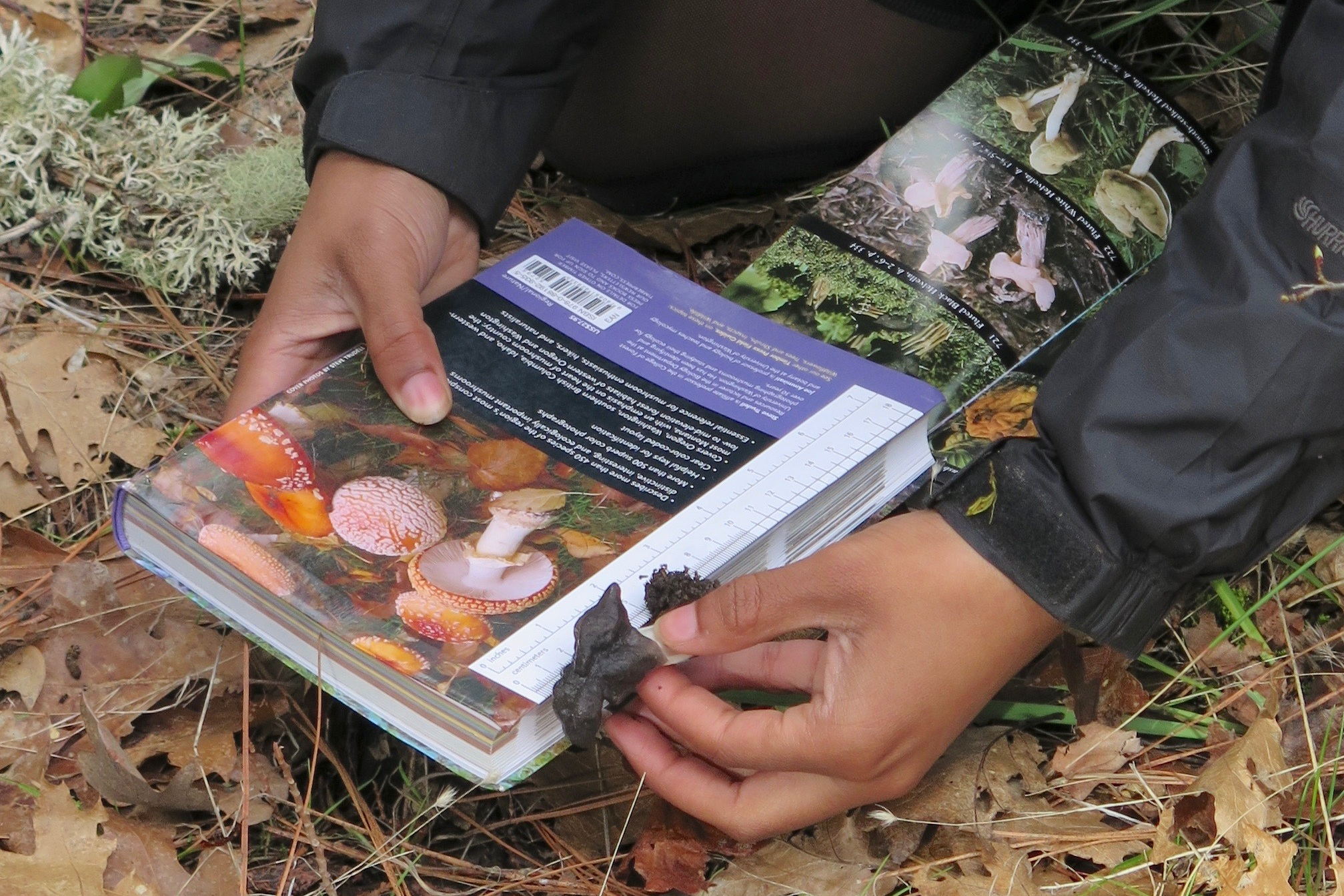 Bashira showing us how to use a fungi ID guide in the field.