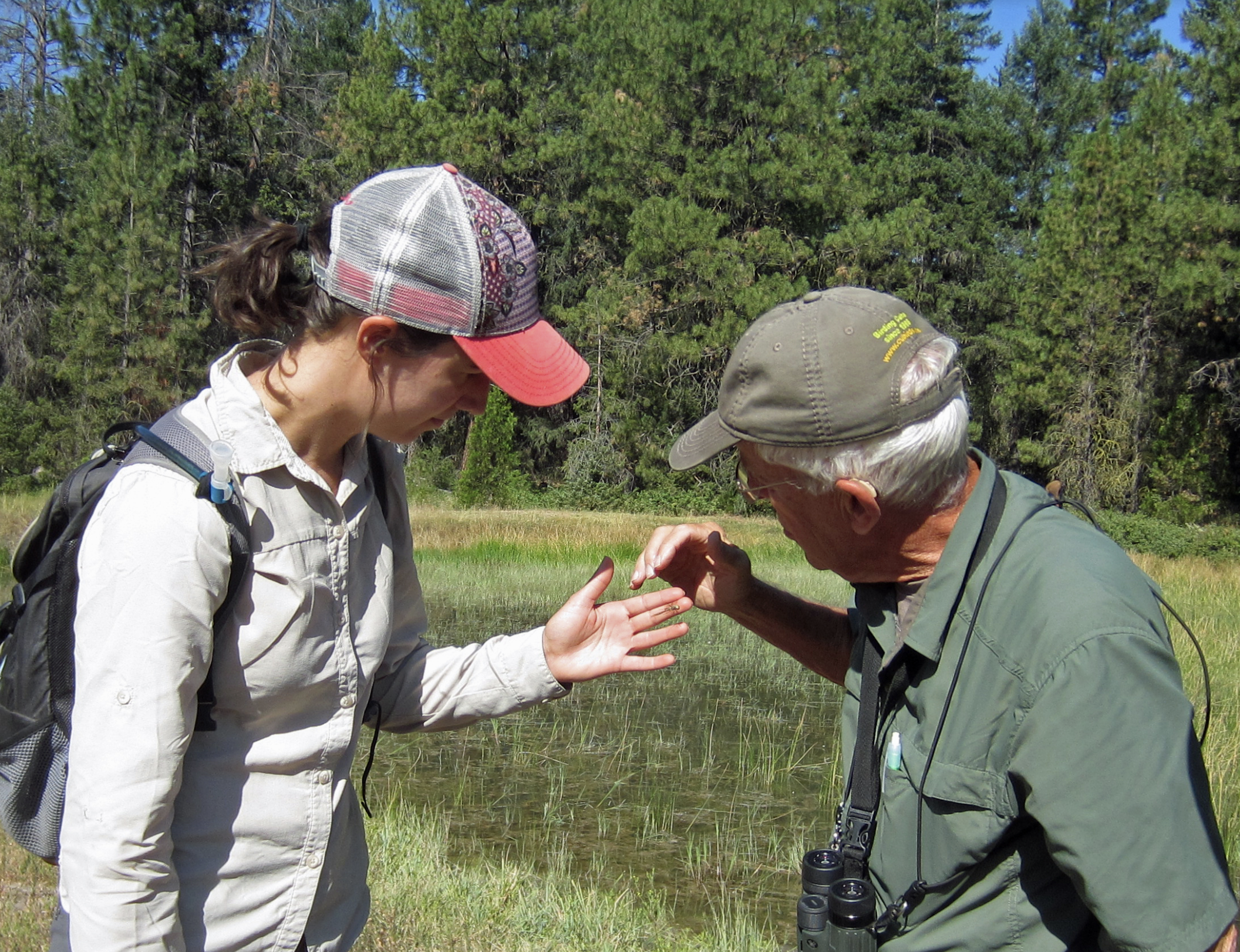 Learning how to identify dragonflies from the experts. Photo by Kristi Reynolds