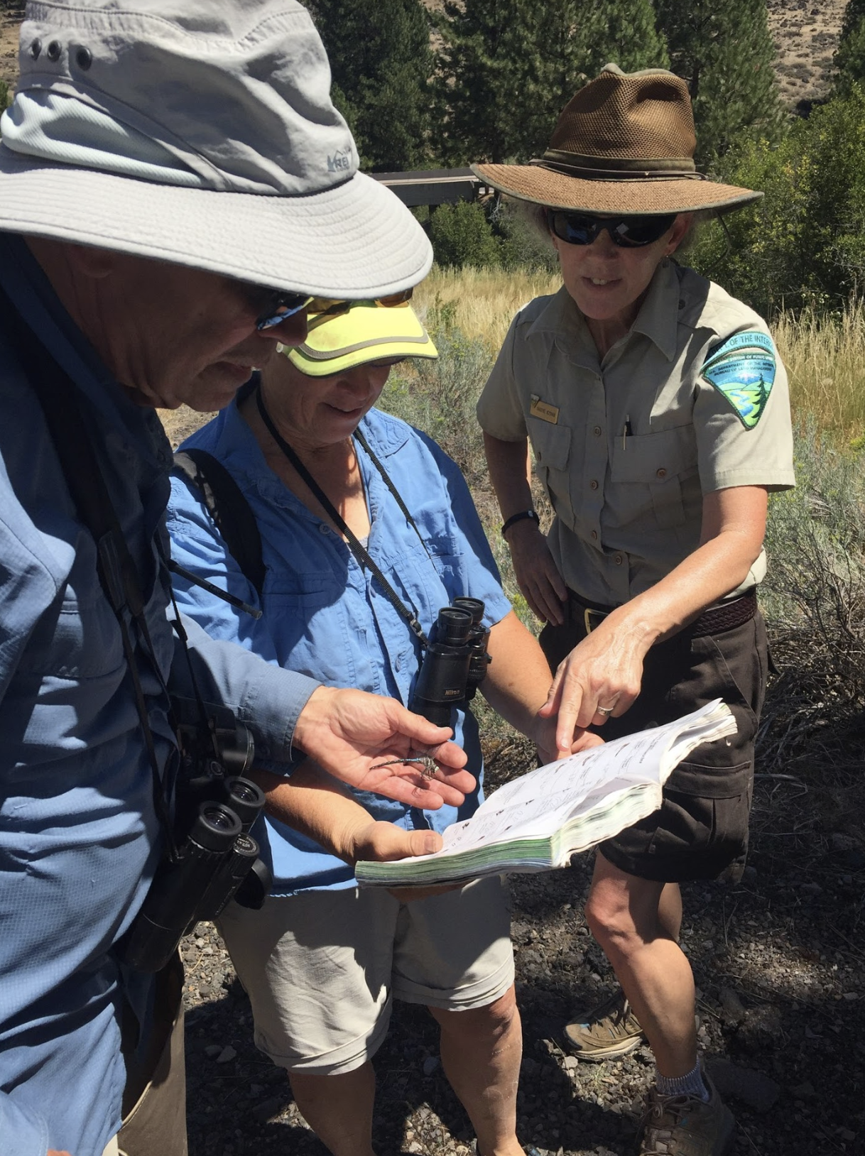 Participants partnered with expert leaders and Cascade-Siskiyou NM staff to identify dragonflies and damselflies.