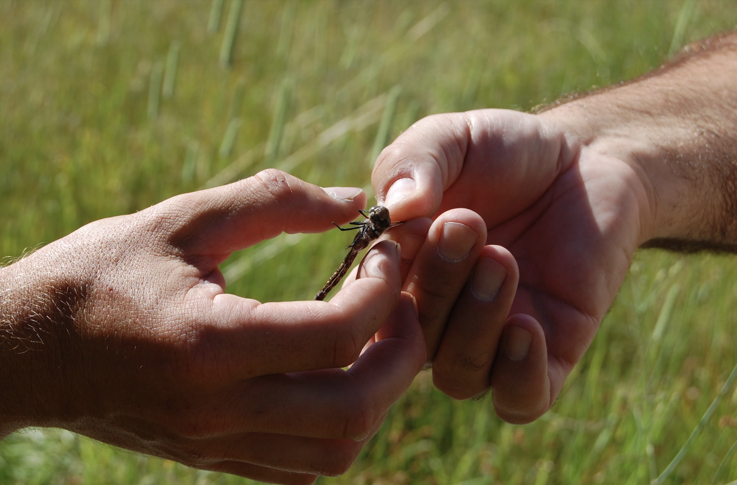 Working together to identify species. Photo By Lilia Letsch.