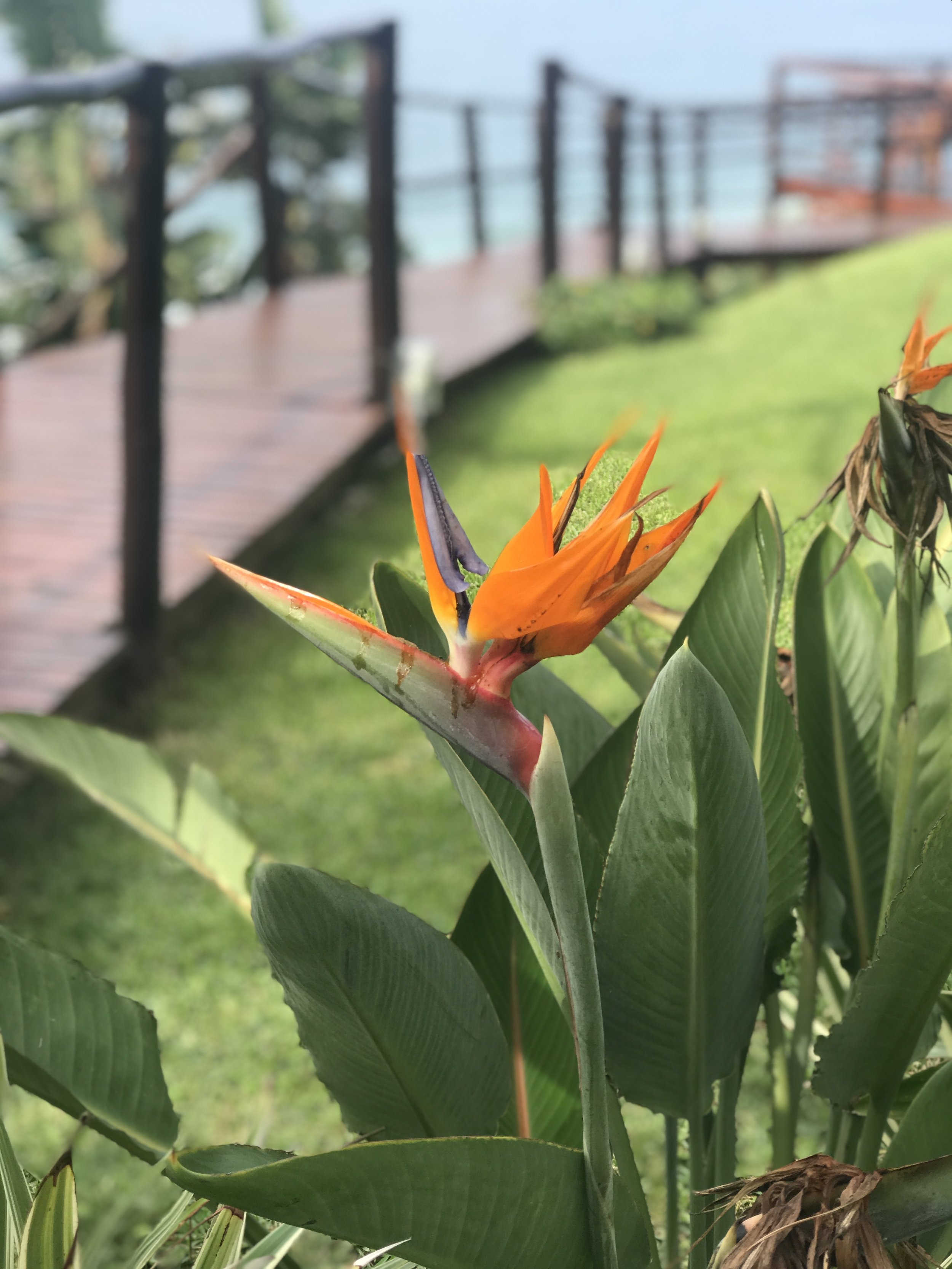 birds of paradise durban south africa