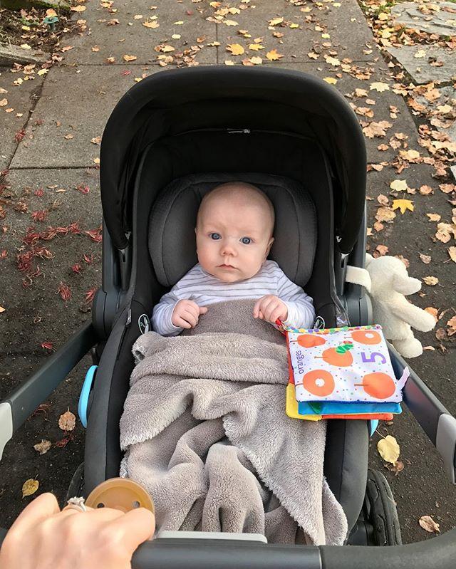 Fall strolls with my sugar baby. 🍂🍁🍂