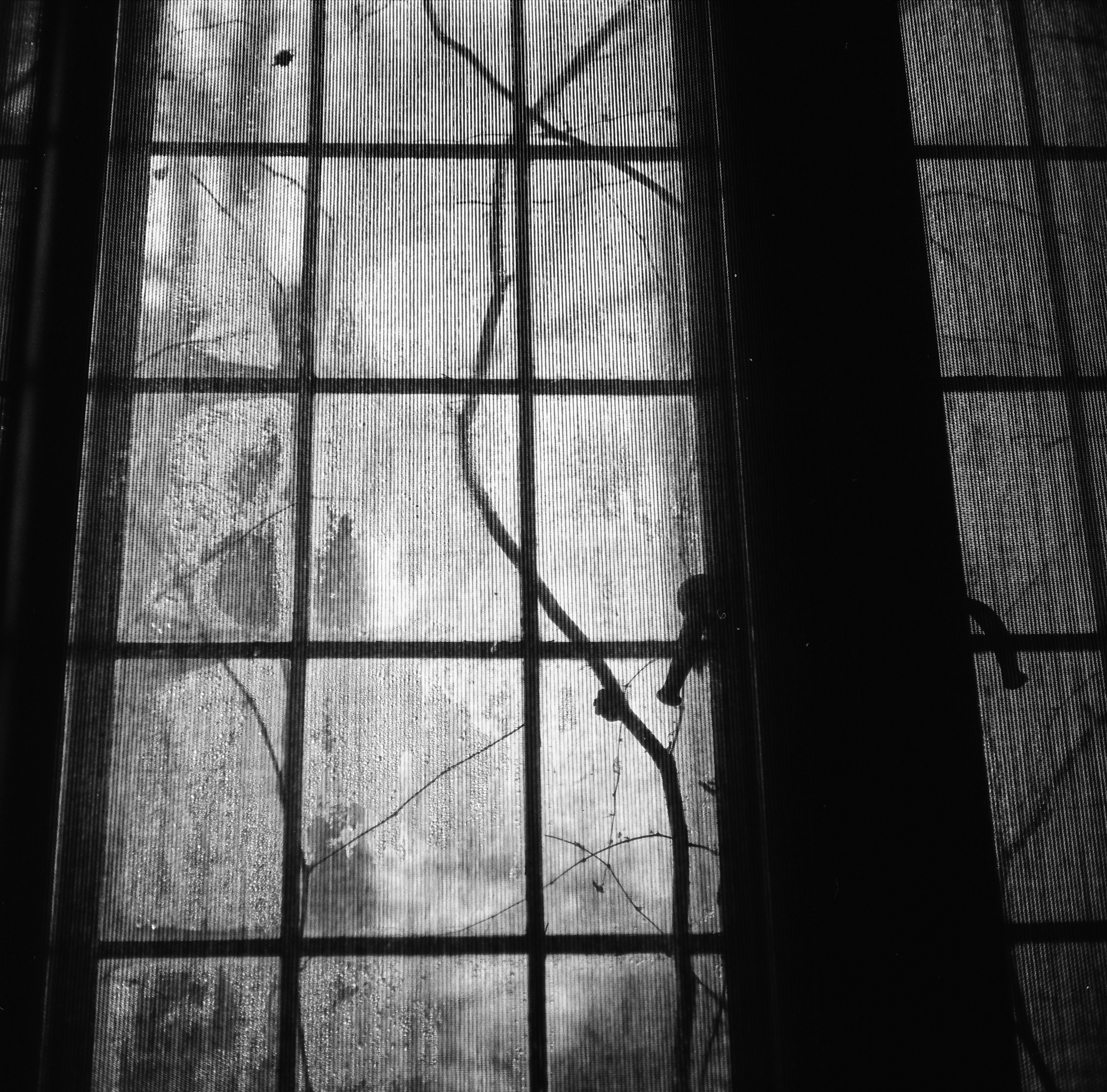 Window. Oriental Institute. University of Chicago. Tri-X 400 pushed to 800. Stand-Developed in Rodinal.