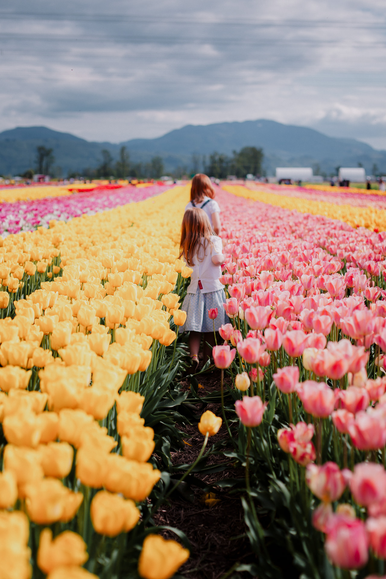 Family_Session_at_Abbotsford_Tulip_Festival-1.jpg