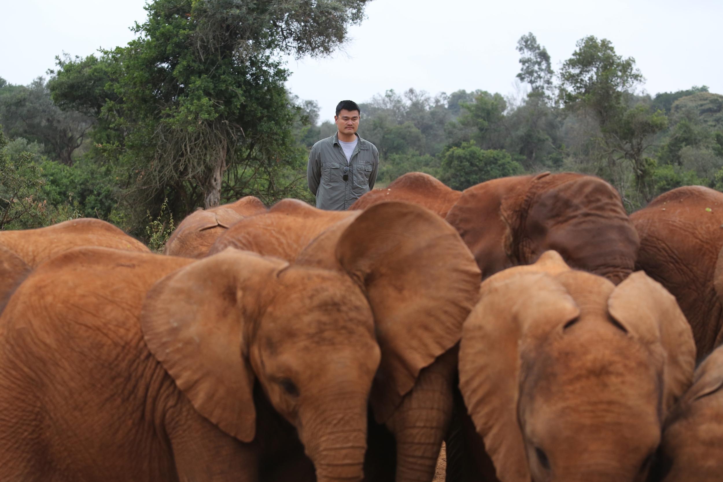 Former basketball star Yao Ming towers over orphaned elephants at the David Sheldrick Wildlife Trust in Nairobi