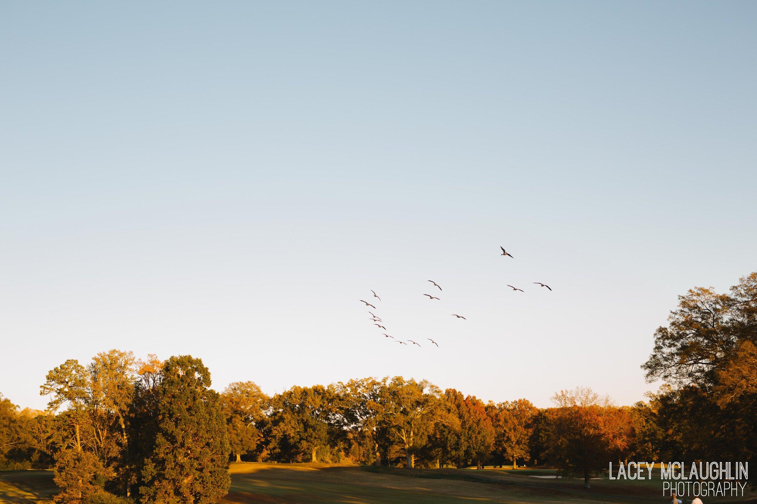 LaceyMcLaughlinPhoto-14.jpg