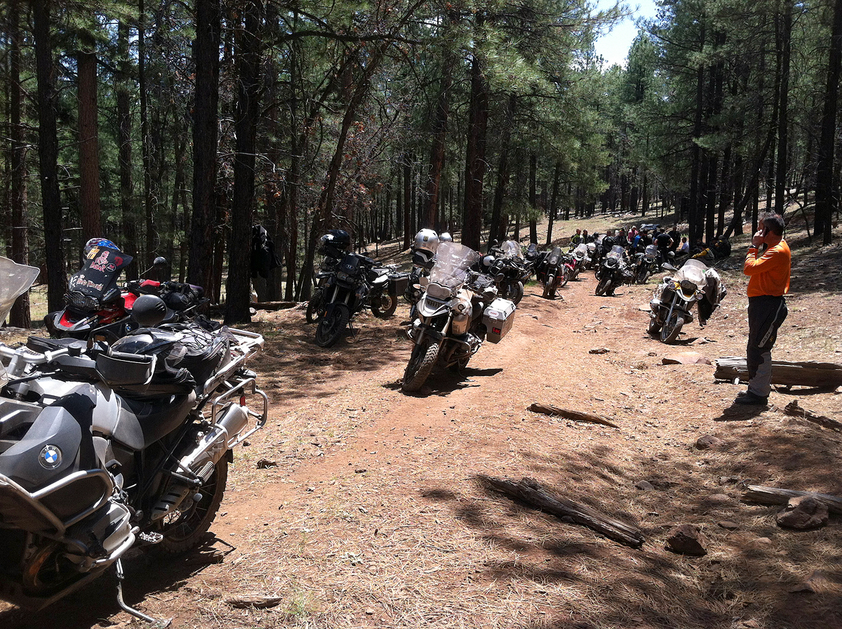 gs in the woods