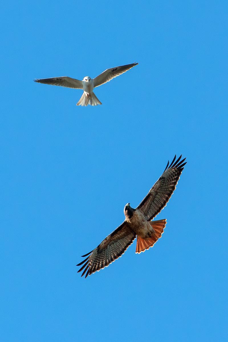kite and tail.jpg