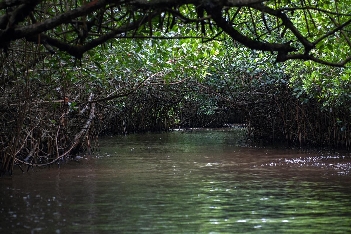 mangrove tunnel.jpg