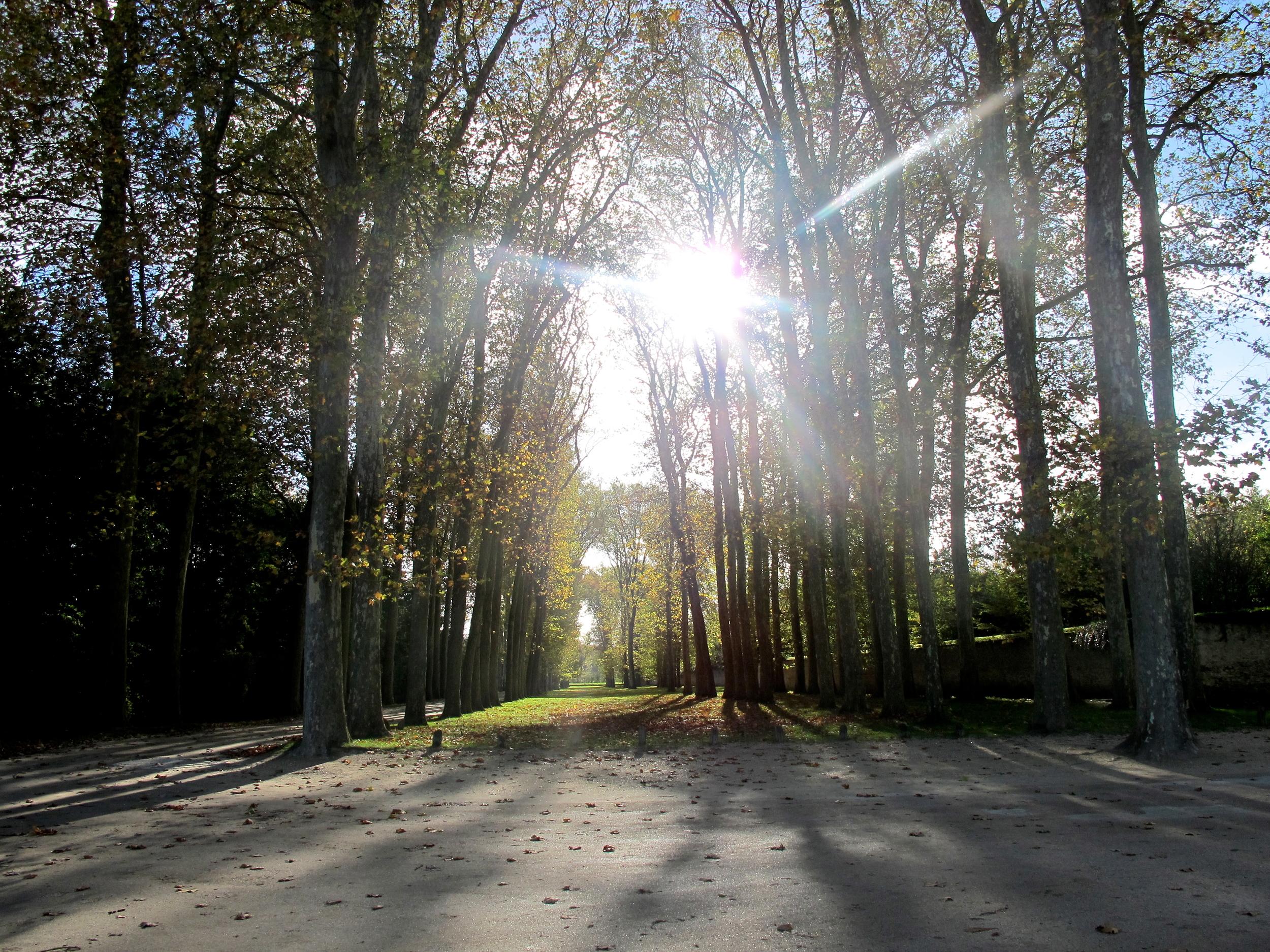 VersaillesTrees.JPG