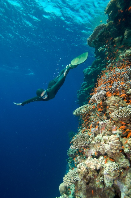 Stunning reefs -- Photo: Dan Burton