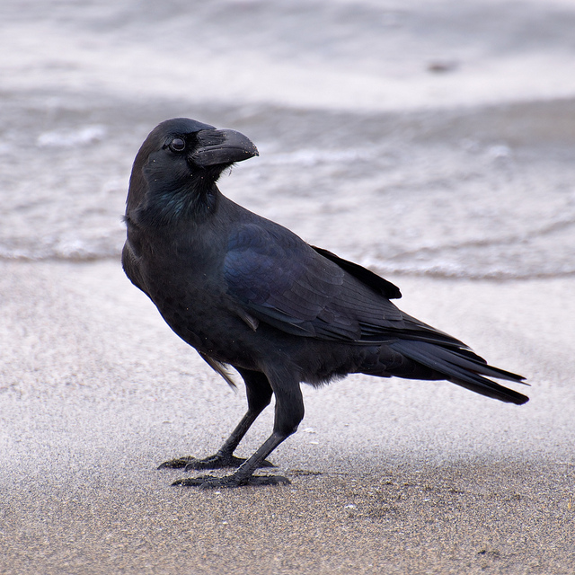 A jungle crow plays an important role in the plot of A Tale for the Time Being