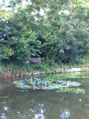 Pond next to Charleston House with reclining statue