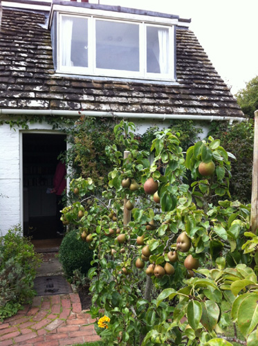 Pears and the door to Virginia's bedroom