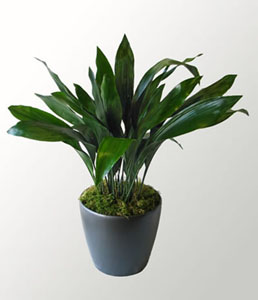 Morwenna gives her partner Ed an aspidistra plant - something that symbolized the common struggle for George Orwell