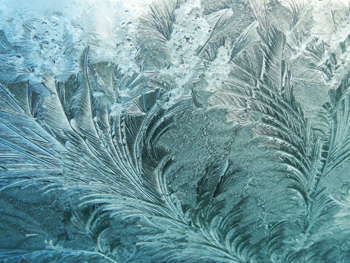 """Fronds of ice have all blown in one direction, creating feathers"""