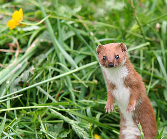 """""""I would like to live as I should, as the weasel lives as he should: open to time and death painlessly, noticing everything, remembering nothing, choosing the given with the fierce and pointed will."""""""