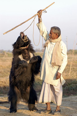 A Qalandar and his bear.