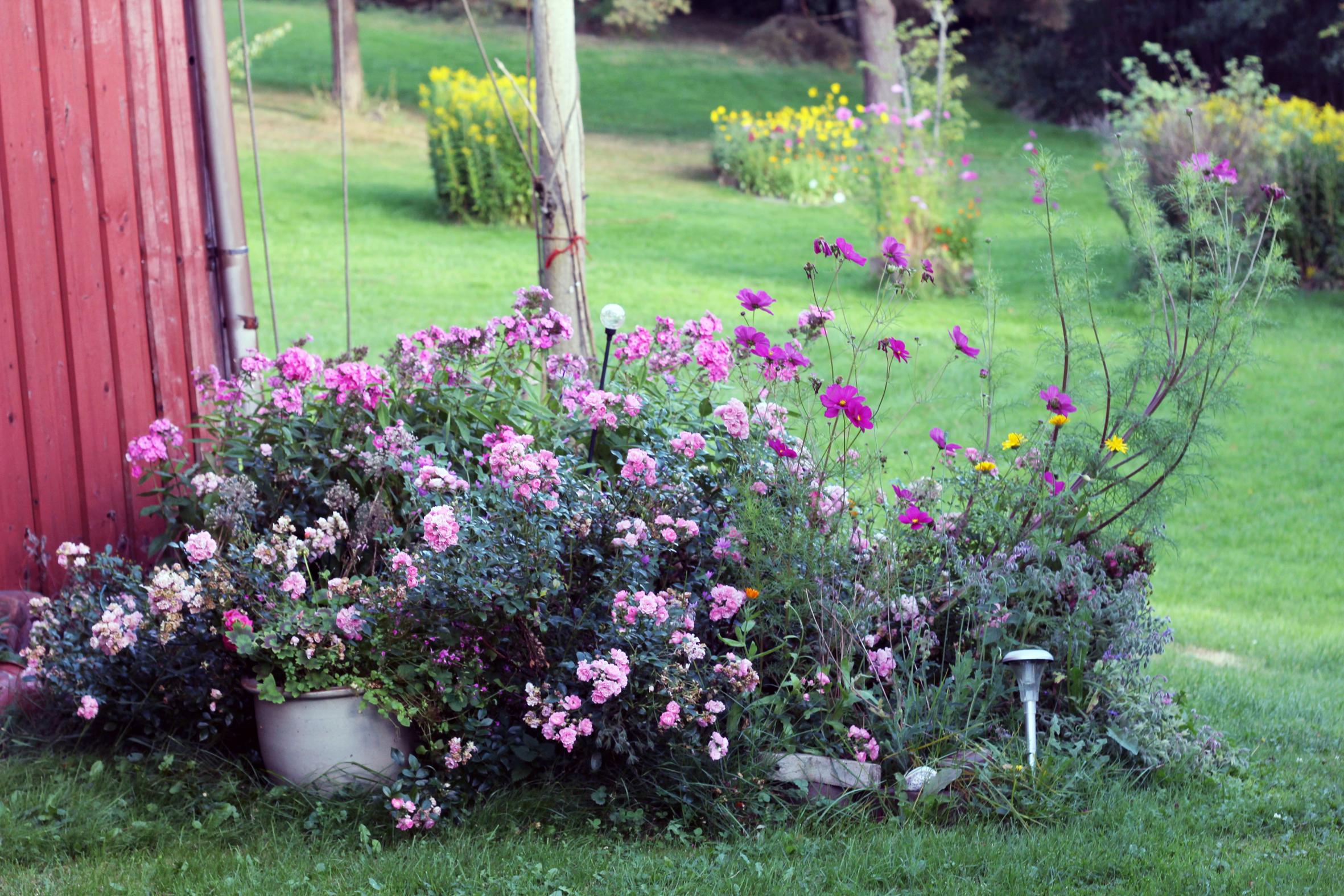 trädgården.jpg