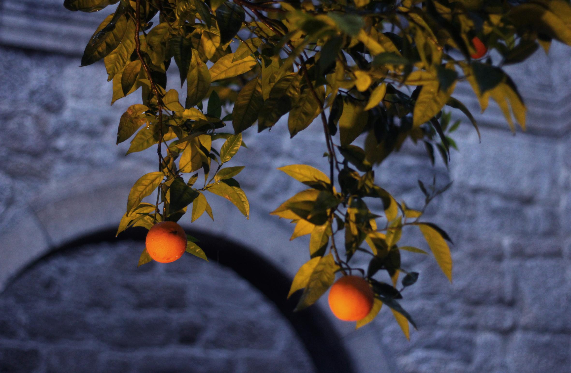 apelsinos.jpg