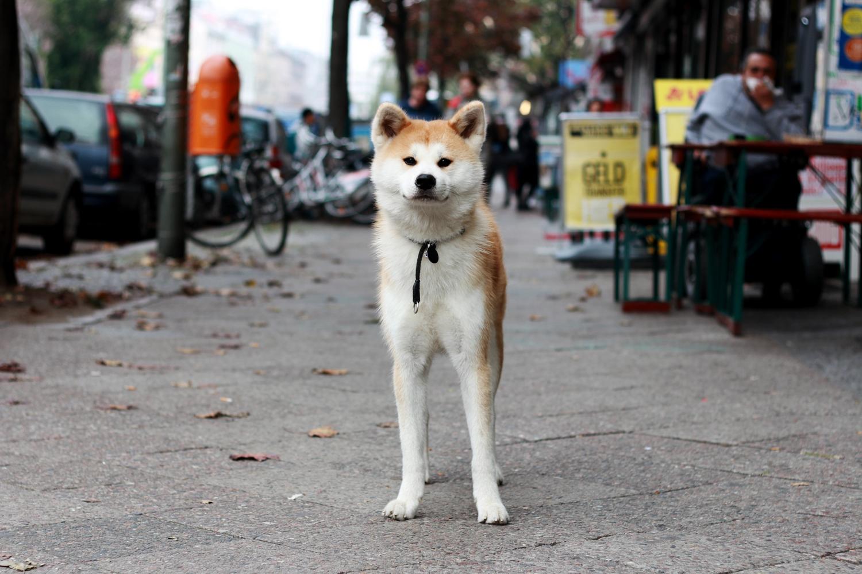 hunden.jpg