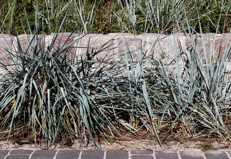 gräs.jpg