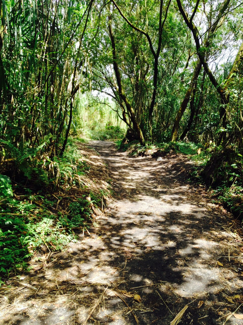 First in a series I call 'The Path'. In the Arenal Volcano National Park.